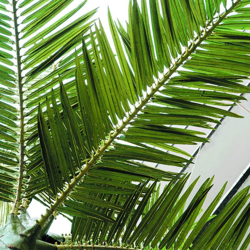 户外仿真椰子树_新款仿真小王椰定制