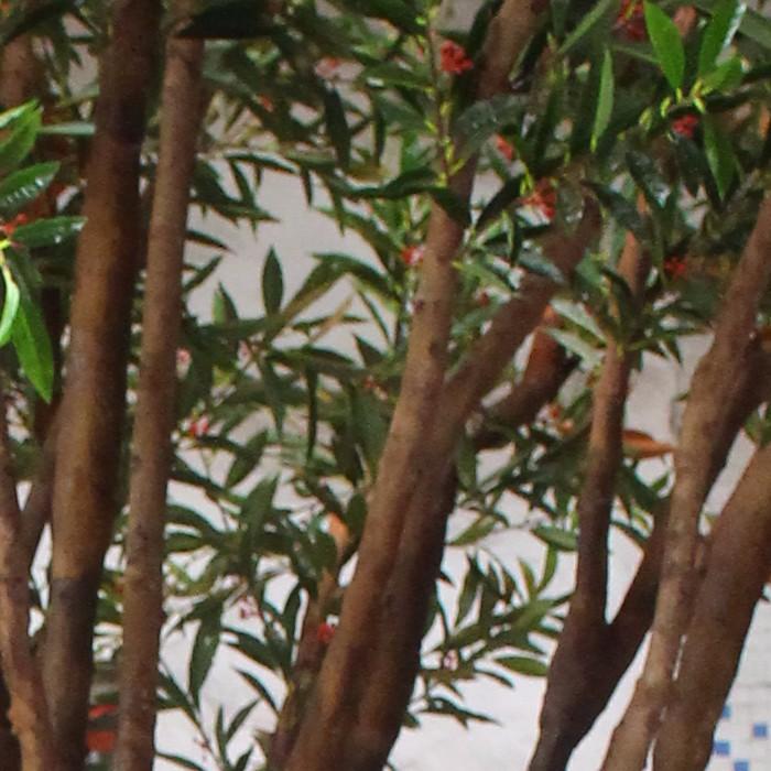 小型仿真橄榄树厂家_仿真橄榄树价格