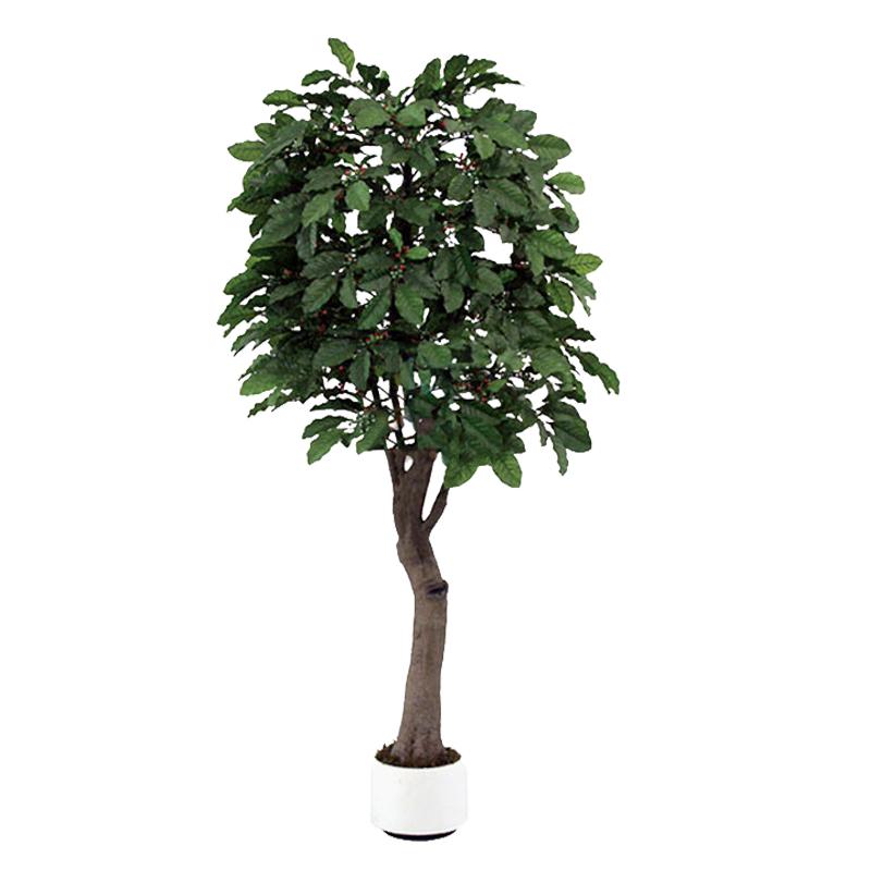 仿真咖啡树_玻璃钢咖啡树_假咖啡树_人造咖啡树