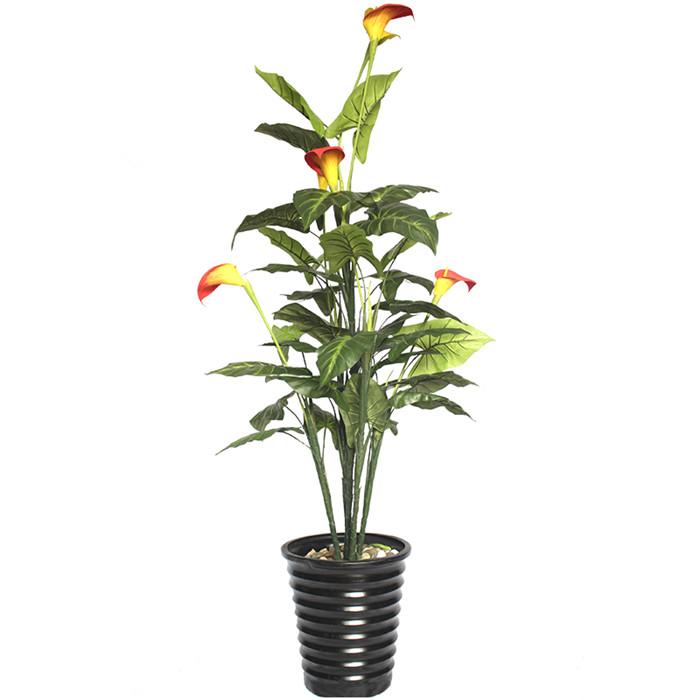 仿真马蹄莲盆栽价格_一盆马蹄莲大概多少钱