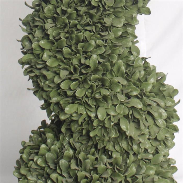 多款米兰草造型盆栽批发_造型盆栽品种