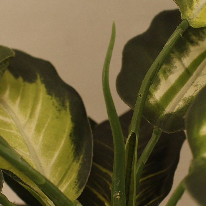 仿真白心万年青植物盆栽_客厅仿真植物小盆景