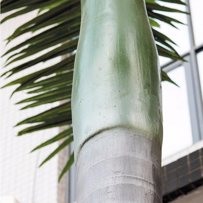 仿真大王椰_人造沙滩大王椰树_热带椰子树大王椰