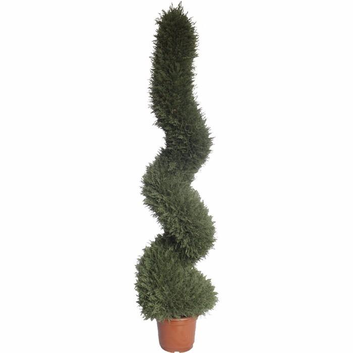 多款松柏造型盆栽_植物造型设计盆景