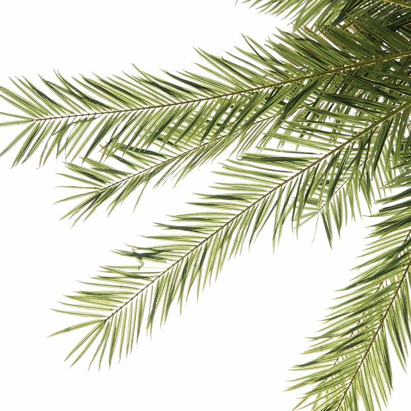 大型仿真椰子树_仿真椰子树价格