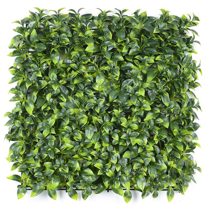 浅双色栀子叶绿化墙_立体绿化植物墙批发