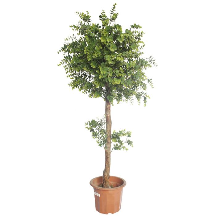 仿真尤加利厂家_仿真植物盆栽批发_真杆造型小树