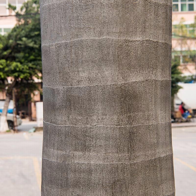 仿真大王椰_人造大王椰子树批发价格