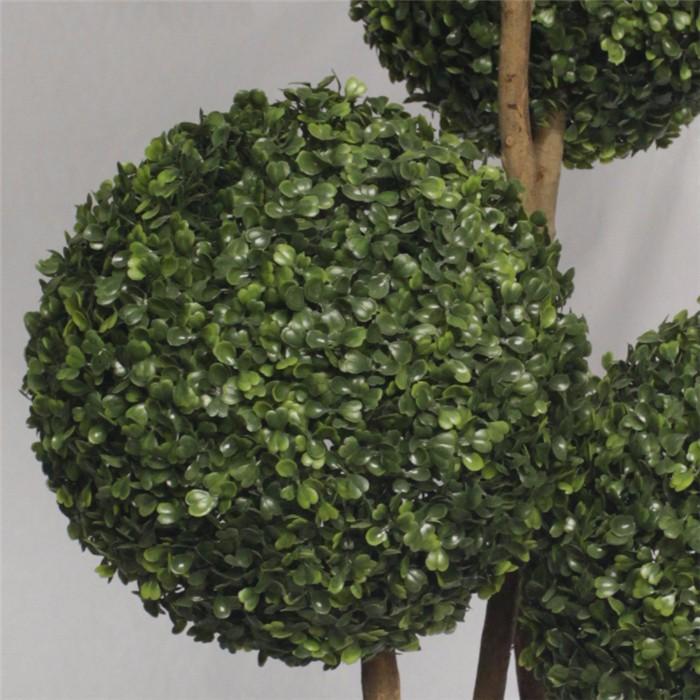 新款米兰草球造型盆栽_盆景造型图